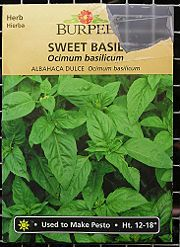 how to grow basil from seed.