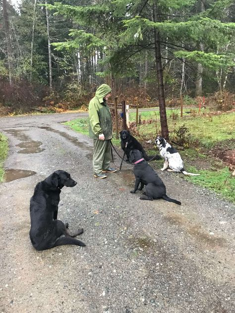 Country Canine Care offers Dog Boarding, Daycare, Training