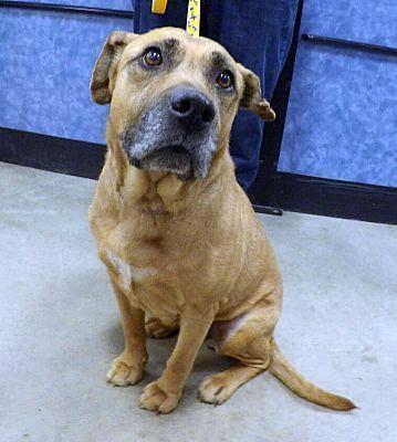 Pictures Of Mattie A Labrador Retriever For Adoption In Detroit