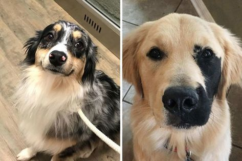 17 Dogs Who Are So Hecking Cute That I Want To Die
