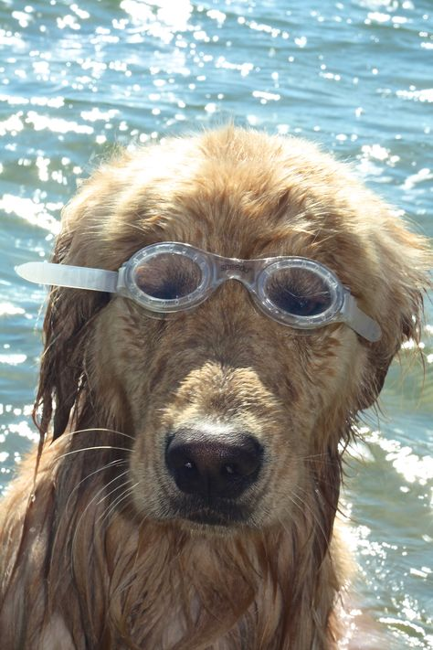 See Your Best Even Underwater Stop By Lux Eyewear Today To Get