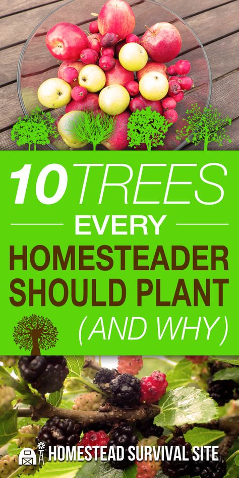 10 Trees Every Homesteader Should Plant (And Why)