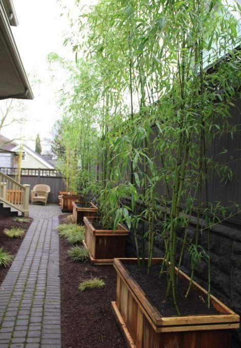 Plantes De Jardin Bambou Bacs Bois Rehausser Ligne Cloture