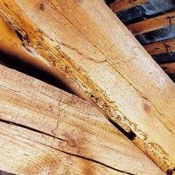 Lutter Contre Les Termites Proteger Et Traiter Son Habitation Insectes Xylophages Charpente Insectes