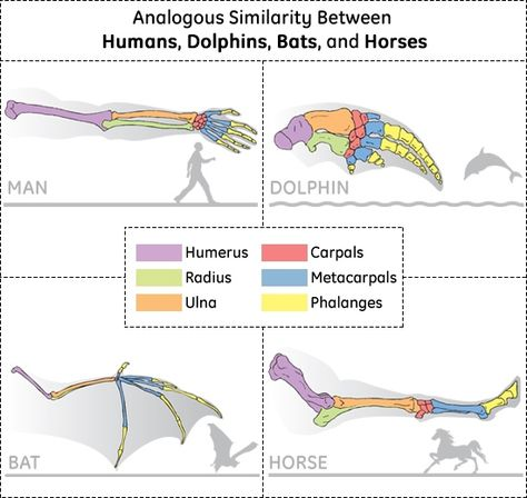 Analogous Similarity In Limbs Stem Middle School