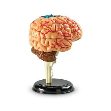 Learning Resources Brain Model LER3335