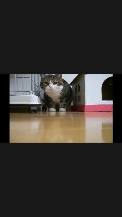 Meow Meow😸😸😸😸