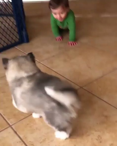 "I love that the baby doesn't know what to do with the dog. He's looking at the person filming and probably thinking, ""what is the fur ball doing to me?"""