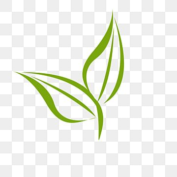 Colorful Green Tea Leaf Png Transparent Premium Image By Rawpixel Com Noon Png Color Green