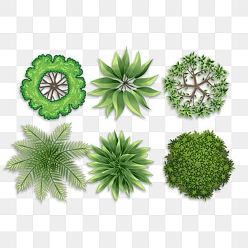 Top View Small Tree Plant Top View Layout Plan Png Transparent Clipart Image And Psd File For Free Download In 2021 Tree Photoshop Yellow Tree Tree Free