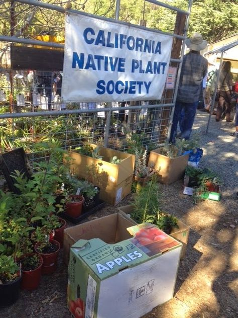 Green Bean Chronicles: Growing Hope Go native to fight climate change and habitat loss!