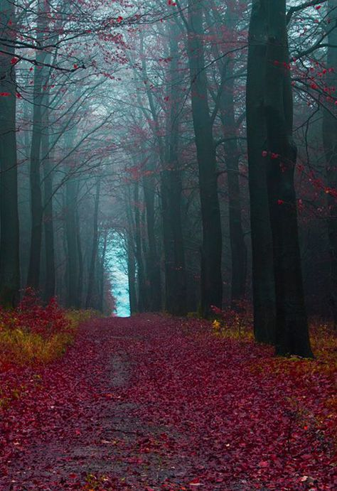 Travel: The Black Forest, Germany
