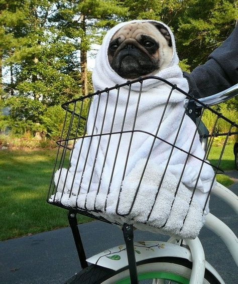 Honor those extraterrestrial good looks - DIY Dog Halloween Costumes You Won't Be Able to Resist - Photos