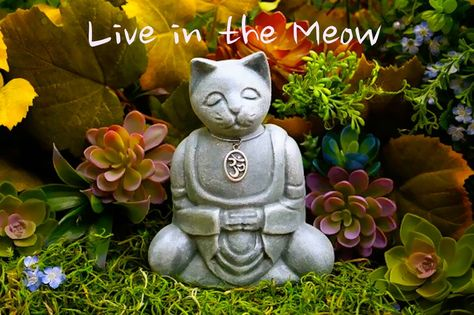 Live in the Meow #mindfulness #humor