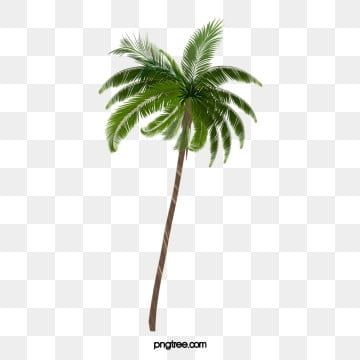 Tree Png Images Download 85000 Tree Png Resources With Transparent Background Tree Photoshop Coconut Vector Cartoon Trees