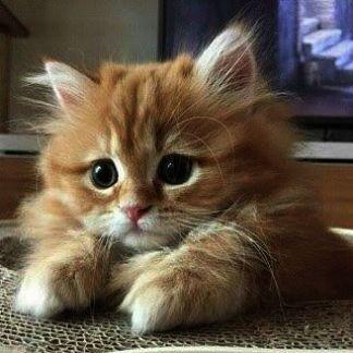 Moody Selfie Kittens Cutest Cute Cats Beautiful Cats