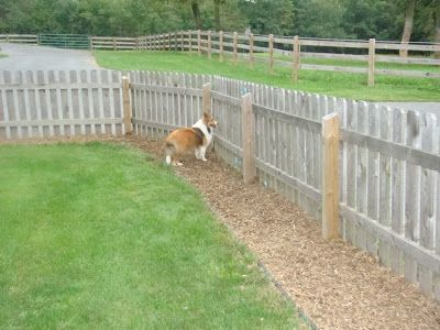Acadia Shelties: yard solutions to muddy dogs