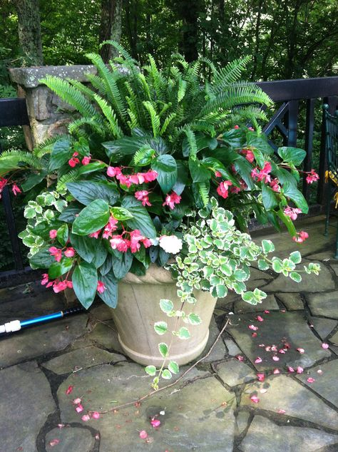 Shade container easy low maintenance