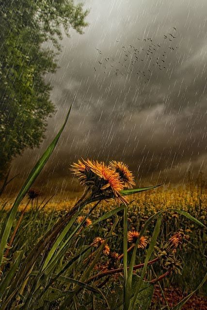 Speedup Illussions — Late Summer Rain. via pinterest.com