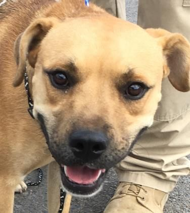 Simba Located In El Paso Tx Has 2 Days Left To Live Adopt Him