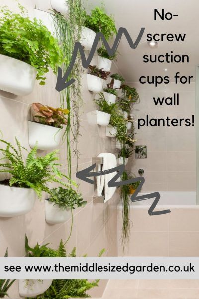 How To Decorate With Indoor Plants Latest Trends The Middle Sized Garden Shower Plant Indoor Plants Plants