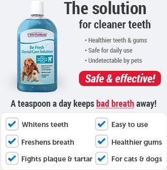 What Is The Best Diet For A Diabetic Dog Or Cat 1800petmeds Dental Medication For Dogs Dental Care