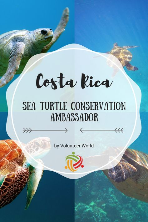 Volunteering saving #turtles, making the difference and meet one of the most beautiful beaches in the world? Join us in Pacific Costa Rica. #costarica #marineconservation