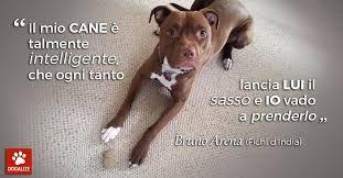 Frasi Sui Cani Pitbull.Risultati Immagini Per Frasi Belle Sui Pitbull Cani Pitbull Brune
