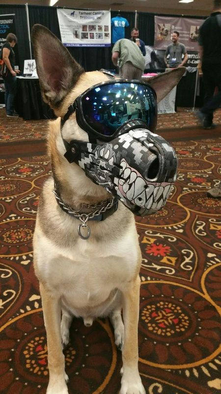 Pin By Peter On Tactical K9s Military Working Dogs Scary Dogs