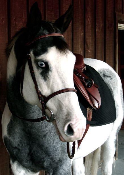 Enjoyable Sport  #horses #horsebackriding #ridinghorse #sports #sportswear #outfit #sportyoutfit #outfitideas #healthylife #healthy #feelgood #sporty #lovehorses #animals #loveanimals #energy #favorite #favoritesport #fashionactivation