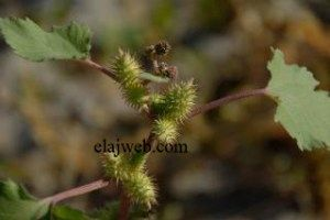 Pin By Safy Nawal On الثقافة الصحية والغذائية In 2020 Plants Flowers Dandelion