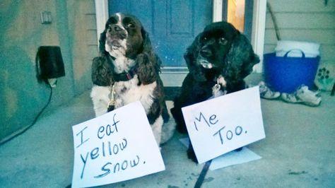 "Dog Shame | Johnny Ringo and Huckleberry confess. ""I eat..."
