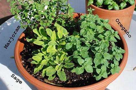 Summer Herbs: helpful info on growing herbs!