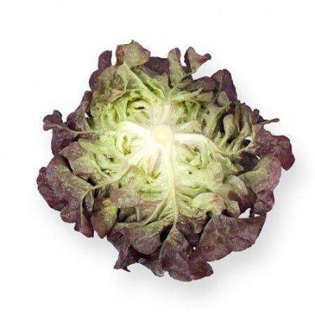 Lettuce Oakleaf Navara