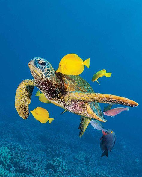 Scuba Diving Top 100: Best Diving in USA & North America | Scuba Diving