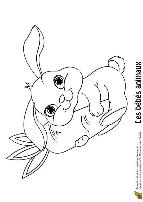 Coloriage D Un Bebe Lapin Qui Tient Une Grosse Carotte Coloriage