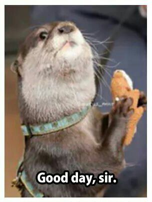Related Image Otter Meme Otters Animals