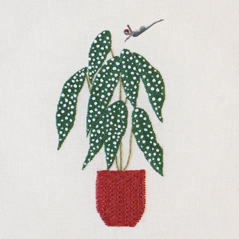 Bastidor con collage e ilustración de la planta Begonia Maculata #bordado #embroidery