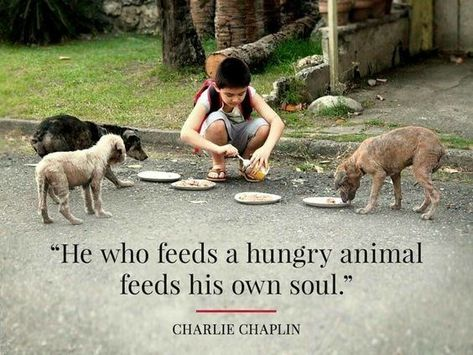 Quotes and inspiration from Celebrity QUOTATION - Image : As the quote says - Description Charlie Chaplin / Animal Quotes Sharing is everything - We, at Quotes Daily, we think that sharing is everything, so Dog Love, Puppy Love, Animals And Pets, Cute Animals, Strange Animals, Stop Animal Cruelty, Charlie Chaplin, Dog Quotes, Animal Rescue Quotes
