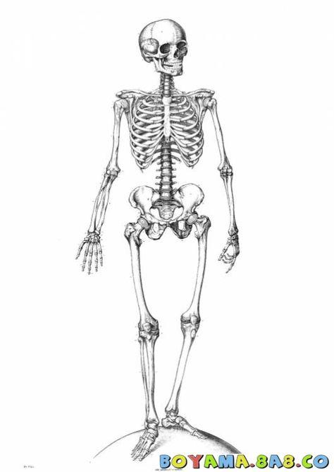 Iskelet Boyama Google Da Ara Iskelet Anatomi Cizimi Dovme Taslaklari