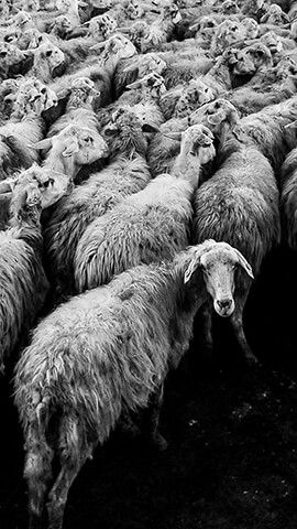 Black Sheep In 2019 Cool Wallpapers For Phones Android