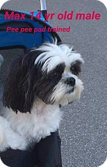 West Palm Beach Fl Shih Tzu Meet Max A Dog For Adoption West Palm Beach Florida West Palm Palm Beach Florida