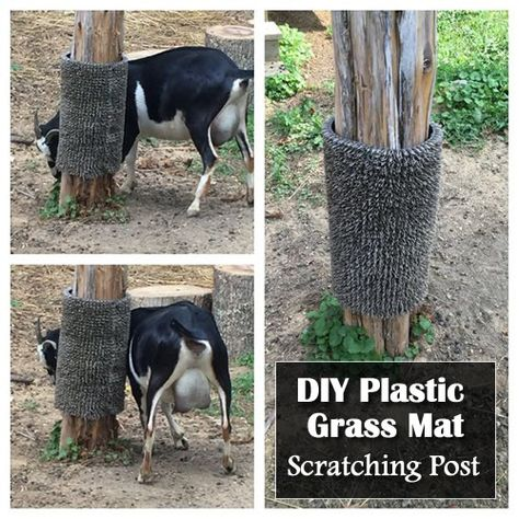 DIY Plastic Grass Mat Scratching Post Hey it's natural, even us human beings need to scratch the itch every now and again. In a previous post I shared this diy gosat scratching post. Goat Playground, Playground Ideas, Pallet Playground, Goat Feeder, Tier Zoo, Goat Shelter, Horse Shelter, Goat Pen, Raising Goats