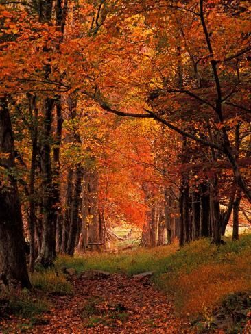 I love the Great Smoky Mountains National Park. I want to see it in the fall. Old Wagon Road from Cades Cove, Tennessee, Print by Adam Jones Old Wagons, Autumn Scenery, Smoky Mountain National Park, Cades Cove, All Nature, Fall Pictures, Great Smoky Mountains, Road Trip Usa, The Great Outdoors