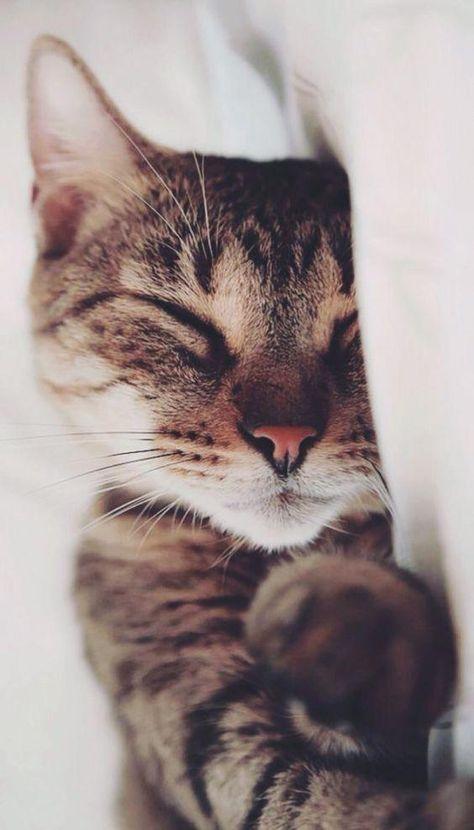 Katze |  Kätzchen | Cat | Kitten | Cute | Playful | Toy | Süß | Niedlich | Pet | Funny | Photo | Photography