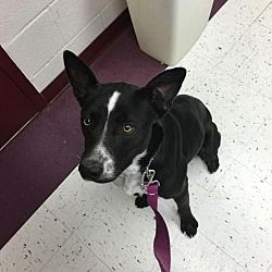 Pin By Cynthia On Animal Rescue Site Pets Animal Rescue Site Border Collie Mix
