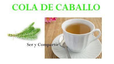 La Cola De Caballo Equisetum Arvense La Cola De Caballo Es Una Planta Medicinal Con Numerosas Plantas Medicinales Plantas Salud Natural