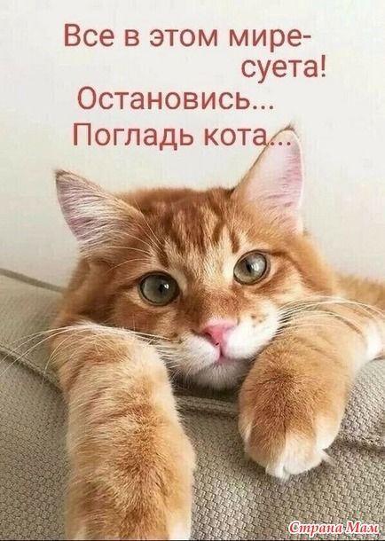 Котейки и другие звери в 2021 г   Кошачьи цитаты, Смешные фотографии кошек,  Смешные котята