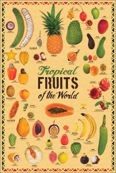 Tropical Exotic Fruit Mango Food Kitchen Papaya Gourmet 24x36 Print Poster