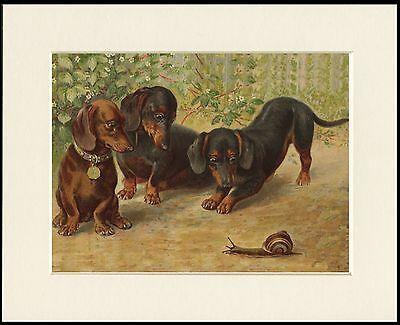 Dachshund Smooth German Sausage Dog Poster Style Fine Art Print Daxi 7 50